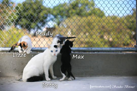 Peddy-Lizzie-Max-Betty